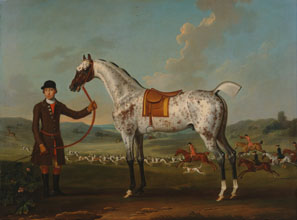 Thomas Spencer Scipio a spotted hunter the property of Colonel Roche