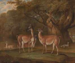 Thomas Weaver Lamas and a fox in a wooded landscape
